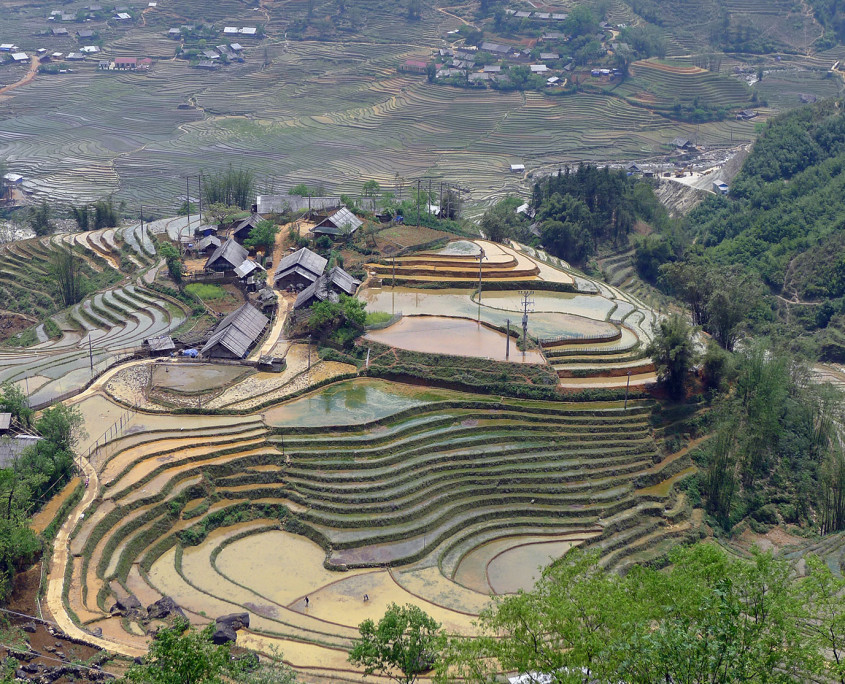 Rice fileds in Sapa